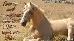 Horse Riding Meme - riding writing reach out to horses new horse memes