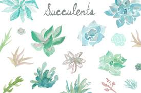 watercolor succulents clip art perfect for your projects