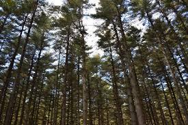 Delaware forest images 11 incredible natural wonders found in delaware jpg