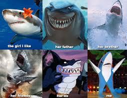 Funny Shark Meme - shark romance ain t easy super bowl xlix halftime left shark