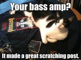 Cat Problems Meme - first world metal cat problems memes quickmeme