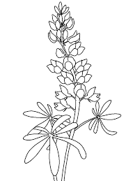 fiori disegni fiori disegni per bambini da colorare