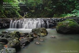 Up Los Banos Botanical Garden The World S Best Photos Of Makiling And River Flickr Hive Mind