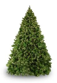 sequoia fir prelit tree lights etc