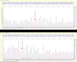 using sanger sequencing to facilitate crispr and talen mediated