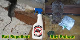 how to get rid of rats in the attic mouse rat removal u0026 rodent