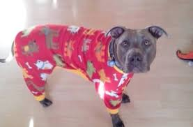 pit bulls in pajamas aim to warm up to the breed huffpost