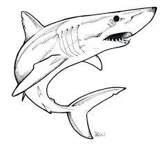 25 beautiful shark drawing ideas on pinterest drawings of