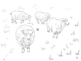 dorset sheep coloring free printable coloring pages