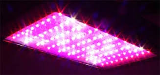 full spectrum led grow lights best home indoor grow lights