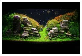 Aquascape Design Decoration Aquascaping Bring Nature Inside Home Ideas