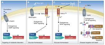 biomedically relevant circuit u2010design strategies in mammalian