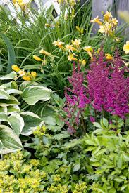 40 best hostas and images on pinterest garden ideas garden