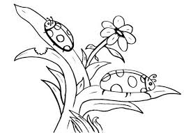 free ladybug coloring pages print out and color 500624 coloring