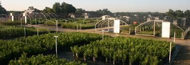 austin texas native plants native texas nursery wholesale to trade plant dealer in austin