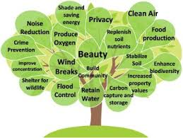 value of trees various benefits and value of the trees