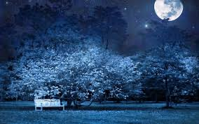 Park Bench Scene Surreal Scene Of Full Moon Night In Park Wallpaper By Billgate