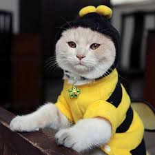Kitten Halloween Costumes Pet 23 Pet Costumes Purrfect Kitty Cat Costumes Images
