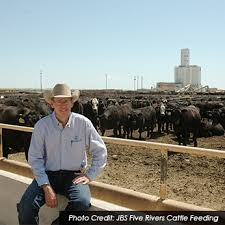 feedlot manager career profile agcareers com