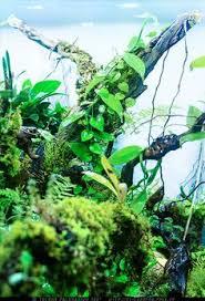 how to build a rainforest terrarium by devin edmonds vivarium