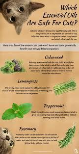 top 25 best essential oils for fleas ideas on pinterest tick