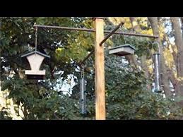 attract backyard birds youtube