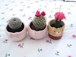 cute pots from daiso in san diego jasmineblu blogspot com