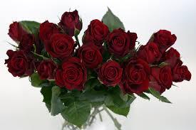free images nature petal romance romantic wedding day