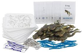 frog dissection kit for classrooms 10 frog specimens