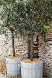 201 best container trees images on landscaping