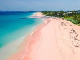 where to find pink sand beaches and black and green photos