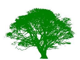 unique free clipart line drawing live oak tree gif