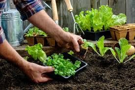 garden ideas your guide to starting a vegetable garden