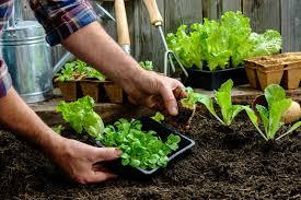 garden ideas your guide to starting a vegetable garden