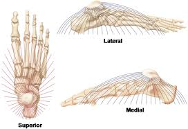 Sole Of The Foot Anatomy The Foot Core System A New Paradigm For Understanding Intrinsic