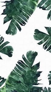 best 25 leaves wallpaper ideas on pinterest palm wallpaper