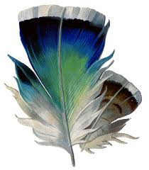 vintage graphic really pretty feather the graphics fairy