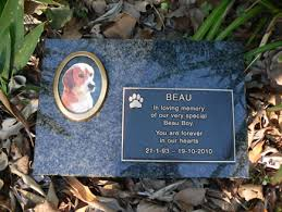 dog grave markers cc forums dog club general chat dog pics