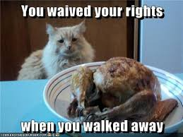 Thanksgiving Cat Meme - lolcats thanksgiving lol at funny cat memes funny cat pictures