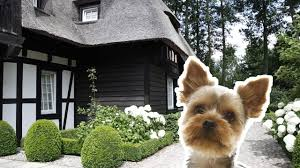 top 5 eco friendly houses spot the little york dog youtube