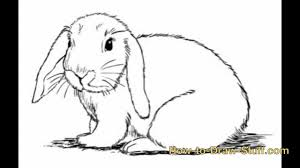 bunny drawing step by step easter bunny stepstep drawings u2013 happy