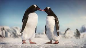 kay jewelers payment kay jewelers penguins