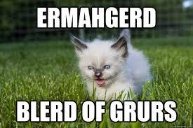Ermahgerd Animal Memes - suggestions online images of ermahgerd cat