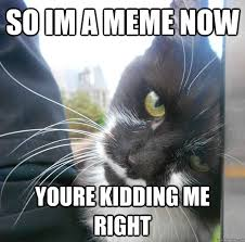 You Kidding Me Meme - so im a meme now youre kidding me right are you kidding me cat