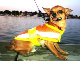 cat with australian shepherd dog cat pet reflective safety vest price includes free shipping
