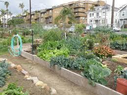 download san diego vegetable gardening garden design