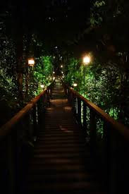 Detroit Zoo Night Lights by 28 Best Singapore Zoo Images On Pinterest Zoos Singapore And Safari