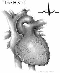 vm the heart oct 10 virtual mentor