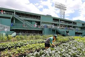 farm system rooftop garden is a hit at boston u0027s fenway park nbc