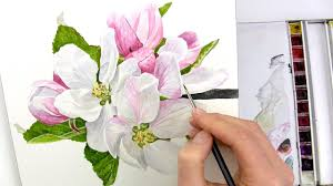 how to paint realistic apple blossom in watercolour with anna